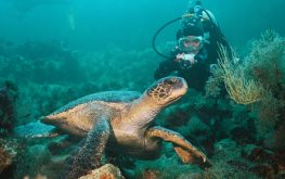 Galapagos scuba diving tour